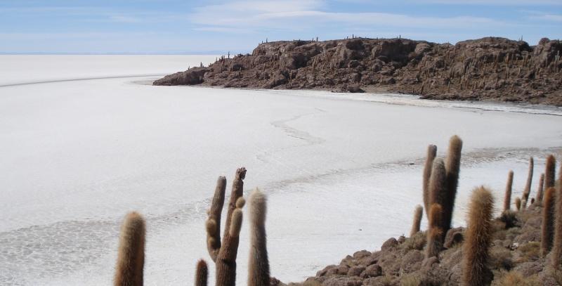 Salt Desert Pescado